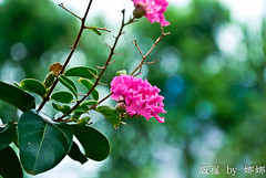 Beautiful flower ( Nana) Tags: flowers love nature   beautifulflower taiwan i