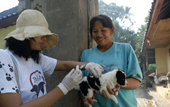 Bali - Dog bein vaccinated with owner