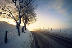 Into the light (Stuart Stevenson) Tags: road uk trees winter white mist snow cold fog sunrise fence photography scotland frost tracks wideangle treelined hss diffusedlight clydevalley slient canon1740mm thanksforviewing canon5dmkii stuartstevenson stuartstevenson