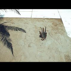 YOU DRY ME CRAZY (Elena Fedeli) Tags: summer italy beach italia spiaggia marche senigallia lido praja marzocca estate2012