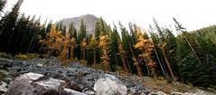 Hike to Lake Agnes (ratzlaff) Tags: lake fall mirror september louise alberta agnes larch teahouse 2012