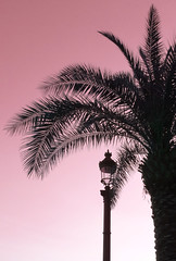 Sunset on palm (Franois Tomasi) Tags: palm soleil touraine tours pov nikon flickr france europe clairage lumire light rverbre lampadaire sun soire nature sunset