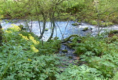 Eyachtal (Schwarzwald / Black Forest) (thobern1) Tags: eyach eyachtal wasserwegle schwarzwald blackforest foretnoir badenwrttemberg germany