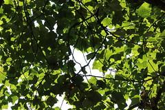 IMG_7868 (Padeia) Tags: 2016 padeia canon germany dslr radtour schlosspark tree baum plant pflanze schlossparkdyck dyckerschlosspark jchen outdoor