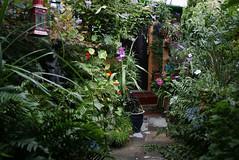 my garden (Romany Soup) Tags: garden