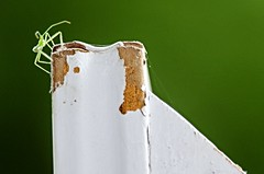 Praying Mantis (LouLou'sLoves) Tags: outside bug insect preying mantis wood frame minnehaha minnesota green