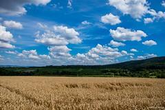 DSC_1446 (Marlon Fried) Tags: landschaft landscape field feld acker getreide cereals crops grain