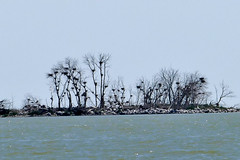 Nest Island (Bucky-D) Tags: lundar longpointbeach sand water fz1000 lakemanitoba beach lake island nest nests lakemanitobafirstnation manitoba canada ca