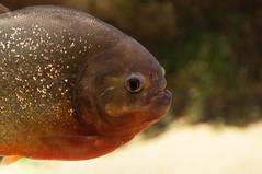 Acuario Agosto 2016 (60) (Fernando Soguero) Tags: acuario zaragoza acuariodezaragoza aragn turismo aquarium nikon d5000 fsoguero fernandosoguero