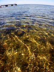 Underwater Ribersborg (Alenius) Tags: underwater under water ocean snorkling snorkelling snorkeling dive diving resund malm sweden skne tng sea snorkla sverige undervatten vatten hav havet dyk dyka nikon coolpix aw130 brygga kust strand stranden blstng klotng bladder wrack bladderwrack seaweed fucus vesiculosus