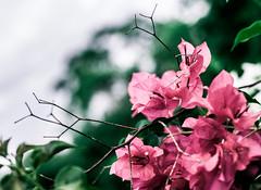 Botanical Series4 (Elena Picart) Tags: elenapavlova floralartprint interiors modern minimal flowerphotographs floralart botanicalprint flowerphotography garden spring decor naturedecor blossoms picargallery