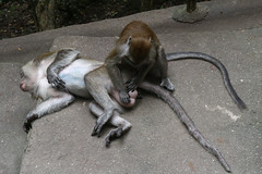 IMG_1219 (oowhatsthatdoo) Tags: kualalumpur nature kl monkey temple steps