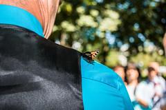 Butterfly on wedding (Black_Cat_Art) Tags: wedding hochzeit casamento butterfly schmetterling borboleta turquesa turquoise trkis happy feliz glcklich love liebe amor canon