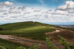Turckheim (Herr Olsen) Tags: france frankreich elsass alsace weinberge wine hills wolken clouds landsacape wein