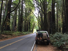 ADV80 on the Avenue of the Giants - Wills RoadTrip 2From OLYMPIA SEPT 2016 (GCRad1) Tags: adv80 avenue giants wills roadtrip 2from olympia sept 2016
