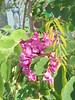 063 (en-ri) Tags: fiorellini grappolo sony sonysti