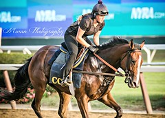 Lauren on Clement Trainee (EASY GOER) Tags: horse equine racing sports thoroughbreds canon 5dmarkiii 400mm 56 belmont park races workouts