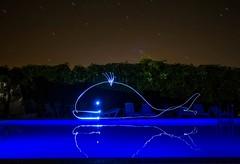Star whale. (Nikolas Fotos) Tags: lightpainting longexposure lightart llightpainting longexposurephoto nightshot nightscape nightphotography night lihgt whale