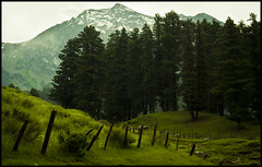 tired unrelenting legs... (parth joshi) Tags: people mist snow fog evening twilight meadows places kashmir peaks himalayas musings smalltowns aru pahalgam