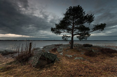 Tyns udde (- David Olsson -) Tags: sunset lake tree nature water clouds dark landscape evening lowlight nikon rocks sundown cloudy sweden tripod sigma cliffs april late 1020mm lifebuoy 1020 tye vnern buoy lonelytree 2012 lifering dx hammar vrmland drygrass lakescape lonesometree d5000 scenicsnotjustlandscapes davidolsson tyns tynsudde