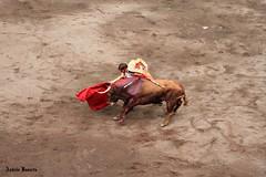 El Juli (andresbasurto) Tags: color verde rojo fiesta bilbao agosto verano maestro bizkaia corrida vacaciones toro euskadi muleta astenagusia 2012 oro faena colorido matador torero grana tauromaquia ganaderia toreo banderillas diestro eljuli taurino astado plazadetorosvistaalegre