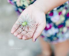 Pine shoot (idni . idniama) Tags: summer girl 50mm hands bokeh girona niña mano colored 2012 brote pineshoot ensusmanos