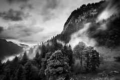 The Forest [flickr Explore] (A-lain W-allior A-rtworks) Tags: fog forest switzerland nikon suisse sigma foret brouillard engelberg 10mm d300s