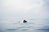 (Anastasia Autumn) Tags: sea summer vacation girl canon skies russia dream sigma krasnodar 30mm inthesea 60d kubana
