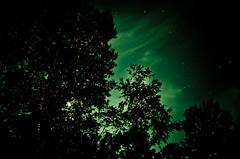 Cloak of Darkness (Truebritgal) Tags: longexposure sky moon tree green nature silhouette clouds dark lens star woods nikon darkness turquoise astro moonlit astrophotography moonlight wispy 30secs d7000 tamronspaf1750mmf28xrdillvc truebritgal