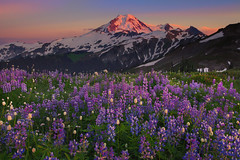 Mt Baker And Wildflowers (kevin mcneal) Tags: sunset mountains nature landscape wildflowers mountbaker lupine northcascadesnationalpark kevinmcneal