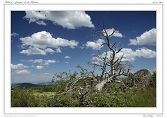 Olloix [Puy de Dme] (BerColly) Tags: sky france tree clouds landscapes google flickr ciel granite gorges arbre paysages auvergne rocs puydedome monne olloix bercolly nuagezs
