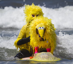 Who knew Big Bird could surf? (San Diego Shooter) Tags: dog dogs bigbird cool sandiego surfer surfing sesamestreet uncool delmar surfingdog cool3 cool4 dogincostume dogsurfing doghalloweencostumes uncool2 uncool8 uncool3 uncool4 uncool5 uncool6 uncool7 surfdogsurfathon surfdogsurfathon2012 nathansurfdogsurfathon2012