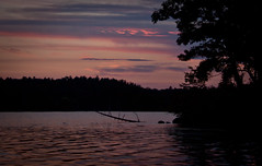 Lake Cobbosseecontee at Magic Hour - Monmouth, Maine (ChrisGoldNY) Tags: travel pink trees sky usa nature water clouds america skies forsale branches maine lakes silhouettes newengland viajes posters monmouth vacations magichour bookcovers albumcovers gridskipper cobbossee cobbosseecontee greatoutdoors sheepisland jaunted chrisgoldny chrisgoldberg chrisgoldphoto chrisgoldphotos