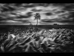 The Silent Island (Shutterfreak ☮) Tags: blackandwhite plants tree monochrome clouds landscape island nikon palm hut layers grassland dip bushes bangladesh d5000 nijhum inkiad