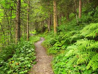 Forest Path in Summer - Zell am See, Austria