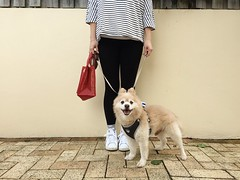 Sunday Morning Strolling with My Dog | My Dog Is Cooler Than Your Kid. (eeemmmiii) Tags: sundaymorning strolling mydog mydogiscoolerthanyourkid