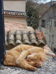 Chat roux du Lubron (thiery49) Tags: lubron cat chat roux