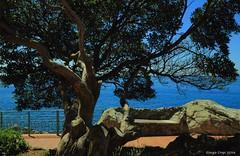 Between sky and sea (Crupi Giorgio (official)) Tags: italia liguria genova nervi mare cielo albero scogliera canon canoneos7d sigma sigma1020 italy sea sky tree reef panorama paesaggio seascape relax