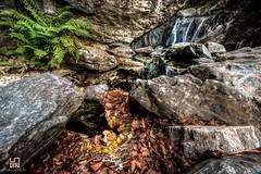 WILD (Lace1952) Tags: greto fiume torrente acqua cascata luce trasparenza folgie felce lanca riflesso rocce pietre beura ossola vco piemonte italia nikond7100 sigma1020f3e5
