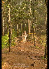 Surreal light, Sai Thong National Park, Chaiyaphum, Thailand (jitenshaman) Tags: travel destination worldlocations asia asian thailand thai saithong nationalpark nature chaiyaphum isan isaan surreal light forest jungle sunset lit ghostly ghost apparition walk path trail