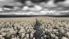 Ghostly Pale (Steve Crane) Tags: nd110 overberg southafrica westerncape accessories camera canola filter longexposure neutraldensity