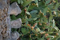 DSC_0876 (Sciabby) Tags: sicily sicilia sciacca filippobentivegna facce faces stone pietra castelloincantato artbrut