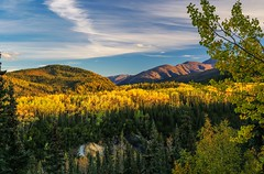 Aspen in the tundra (Cole Chase Photography) Tags: autumn alaska fall denalinationalpark aspen canon eos5dmarkiii