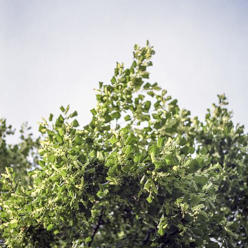 Summer branches - part 4