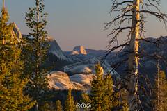 Half Dome from Tuolumne Meadows (au_ears) Tags: sunset california halfdome yosemitevalley 2016 yosemite trees medlicottdome