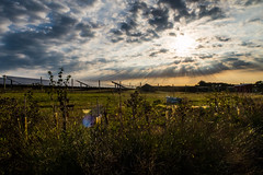 Solar Power (@bill_11) Tags: sunrise solarpower solarfarm eastkent thornehill sunbeams dawn