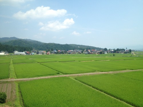 Rice fields in Niigata Prefecture, Japan