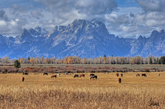 Autumn in the Tetons - 1402_3_4bsg (teagden) Tags: park autumn horses mountain mountains west fall landscape photography wildlife scenic grand scene national western wyoming grandtetons teton tetons grandteton gtnp wildlifephotography jenniferhall