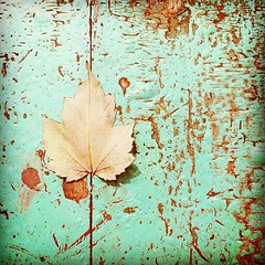 oneleaf (lucy.loomis) Tags: brown square leaf chair aqua paint turquoise squareformat scratched chipped hefe greenchair iphoneography instagramapp uploaded:by=instagram