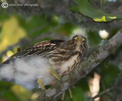 Gotta Love Em! (raineys) Tags: california santacruz bird nature wildlife tios greenheron specanimal raineyshulerphotography sjohnsontintinians